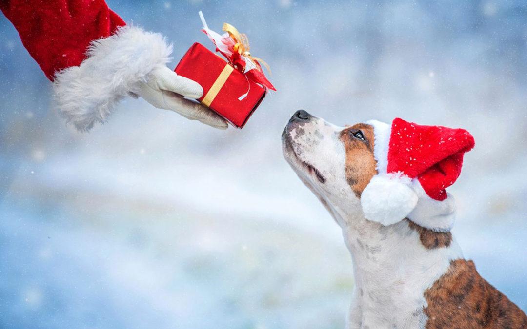 Come trascorrere al meglio le vacanze natalizie insieme al proprio cane