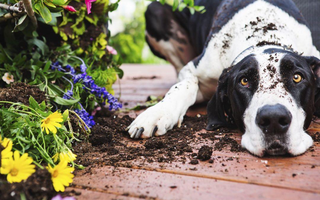 No al cane che vive isolato in giardino!