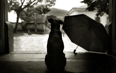Passatempi per le giornate di pioggia!