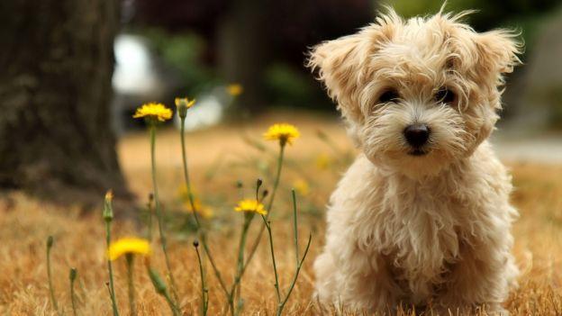 Cani di piccola taglia, ma comunque cani!